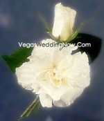 Rose Carnation Boutonniere