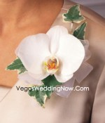 Phalaenopsis-orchid-corsage